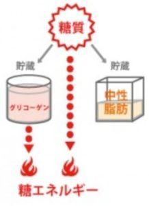 ブドウ糖代謝