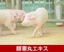 豚睾丸エキス