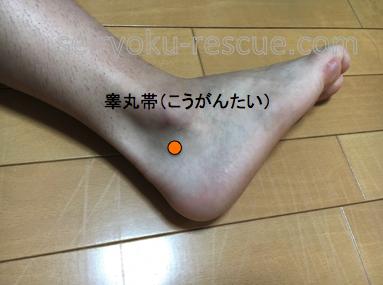 睾丸帯(こうがんたい)