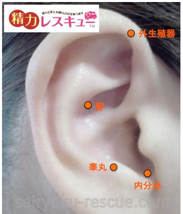 耳の精力ツボ